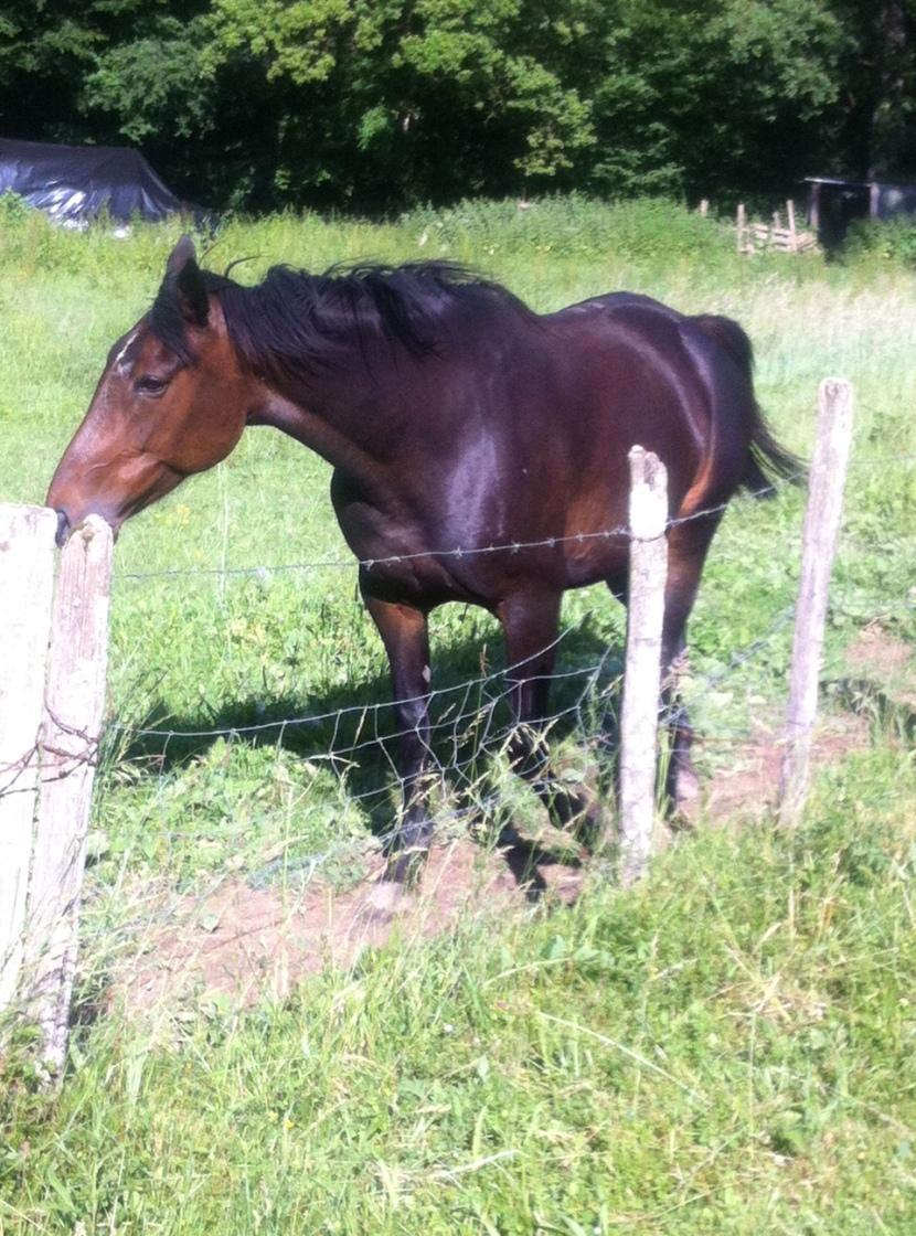 un cheval a la campagne